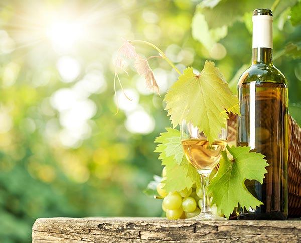 Víno Müller Thurgau má harmonické nižší kyselinky, je středně plné s pěknými aromaty květin a muškátu.