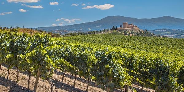 Neuburské je víno, které si opět razí cestu na výsluní zájmu vínomilců